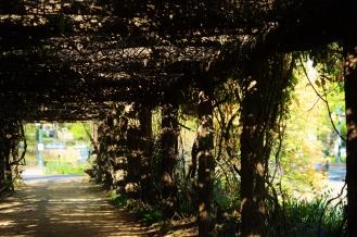 Arboretum Rays